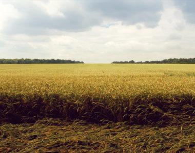 Becoming Kingdom Harvesters